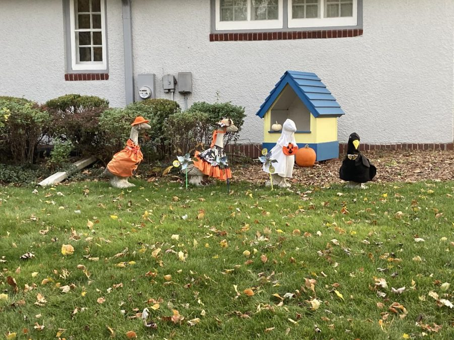 The geese dressed up in their Halloween costumes.