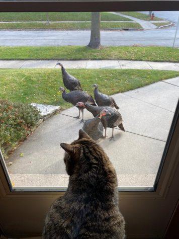 The Tosa Turkeys - Thanksgiving Gone Wild