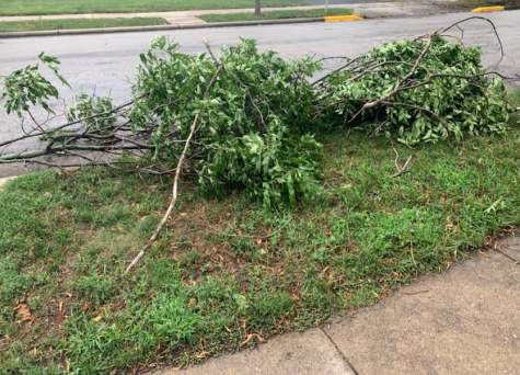 These pictures show fallen branches and debris that caused problems for many residents of Wauwatosa.